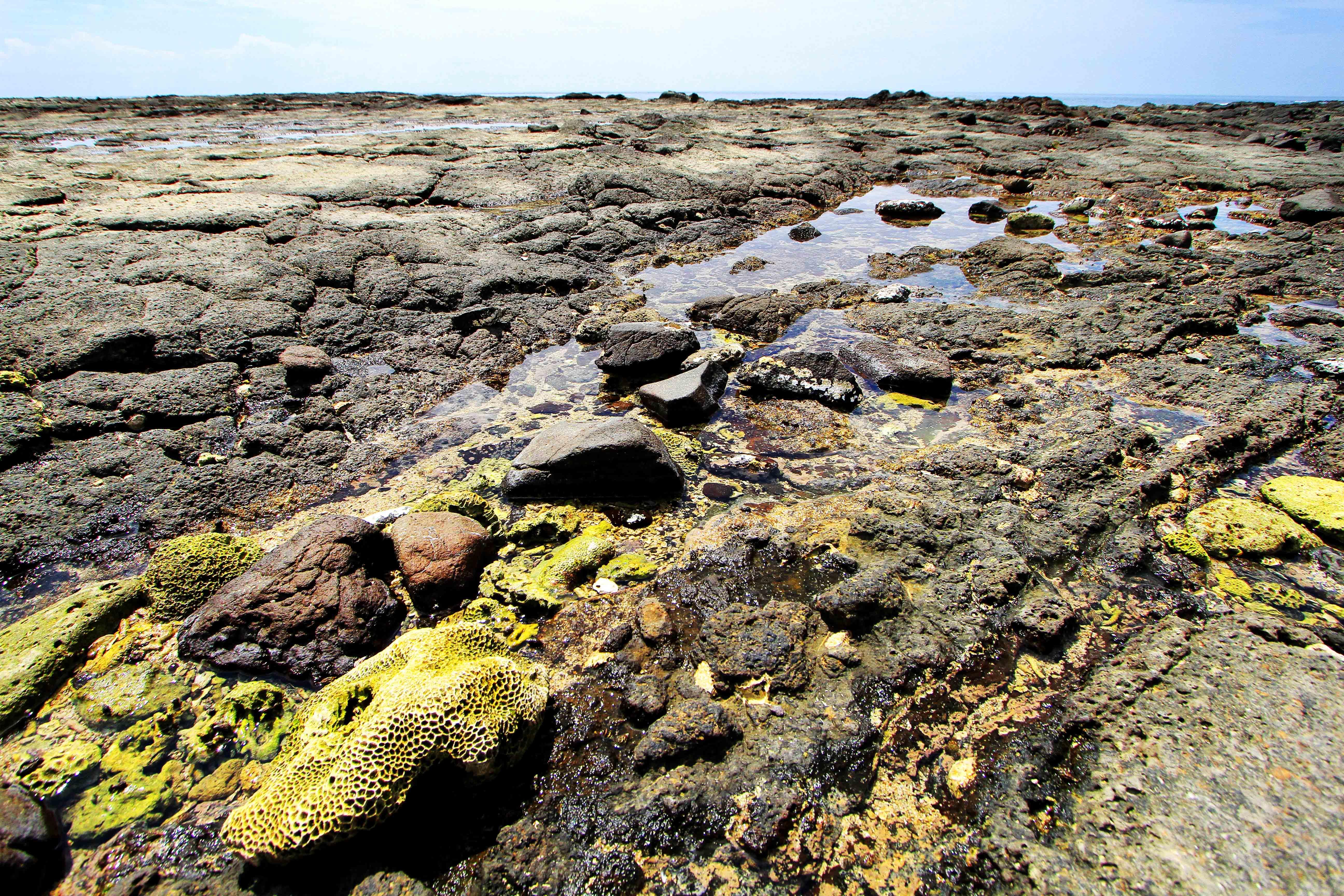 學仔尾海蝕平台地質風貌